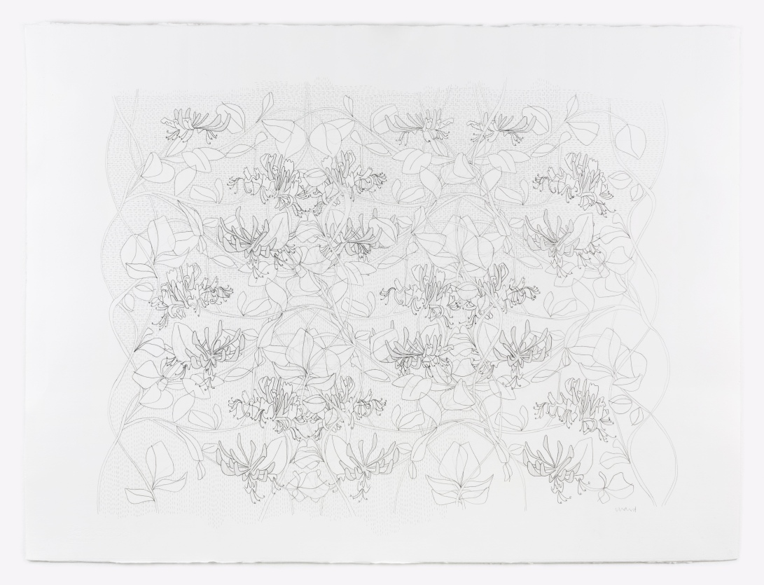 Honeysuckle Drawing 1